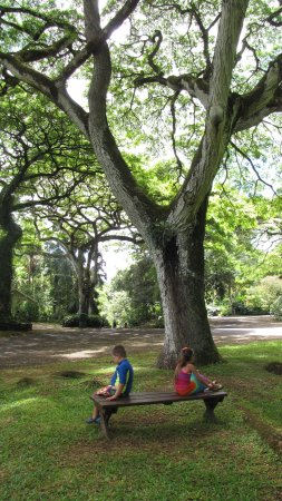 Waimea Valley: kids taking a break beneath a beautiful tree