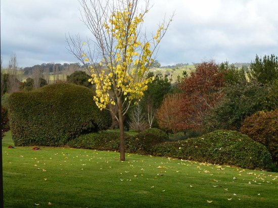 Clifton Grove, Australien: Autumn leaves in the garden