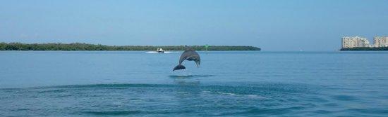 Capt. Ron's Awesome Everglades Adventures : Amazing!!
