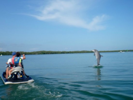 Capt. Ron's Awesome Everglades Adventures : Dolphin Jumping