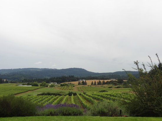 Willamette Valley: the view!