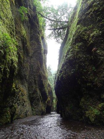 Oneonta Gorge: through the gorge