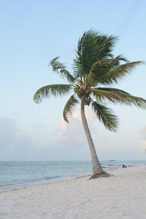 PavoReal Beach Resort Tulum: Beach :0)