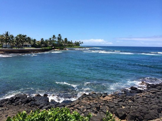 Kuhio Shores Condos: Just your average, everyday view