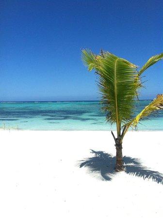 PavoReal Beach Resort Tulum: Beach and clear water