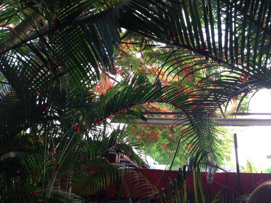 Kinta Mexican Bistro: Canopy of shade above our table.