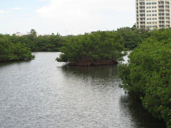 Sarasota Bay Explorers: mangroves
