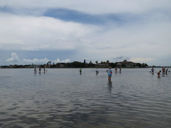 Sarasota Bay Explorers: anchored on the sand bar