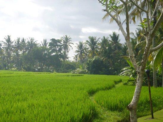 Alaya Resort Ubud: お部屋から