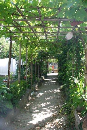 L'ilot Bambou: garden