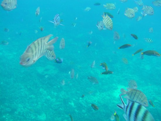The Taaras Beach & Spa Resort : Diving at the Pontoon, above the hotel's own coral reef. Amazing