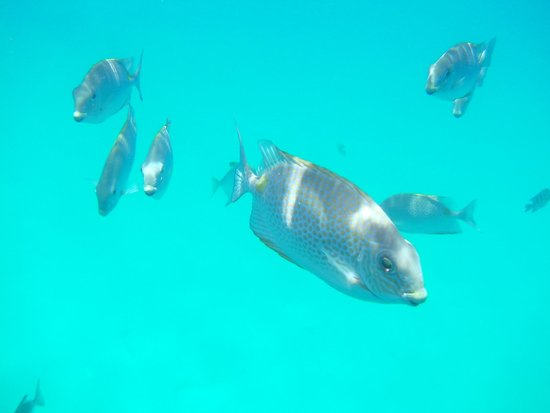 The Taaras Beach & Spa Resort : No fear in the fish at the resort's reef.