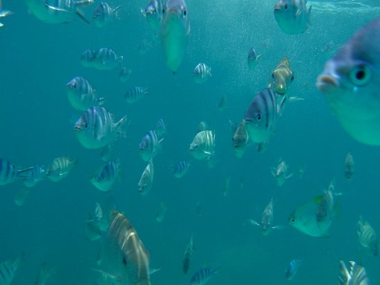 The Taaras Beach & Spa Resort : Fish at the Resort's reef were curious, some nibbling too.