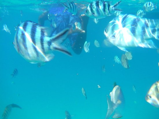 The Taaras Beach & Spa Resort : Fish were very curious, followed us in swarms