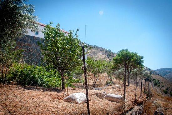 Olive Trees In The Monastery Garden Picture Of Profitis Ilias Monastery Hydra Hydra Tripadvisor