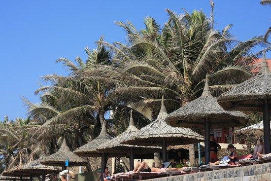 Blue Waves (Tien Dat) Resort: лежаки отеля