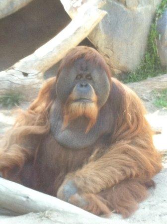 San Diego Zoo : ...