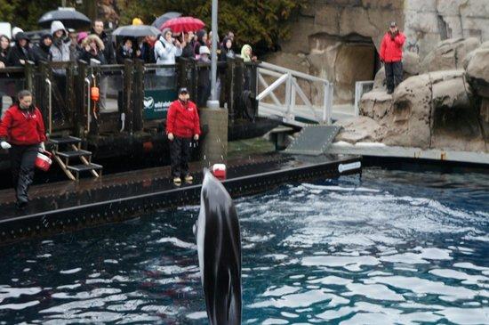 Vancouver Aquarium: イルカショー