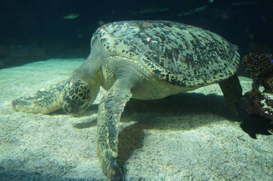 Vancouver Aquarium: カメ