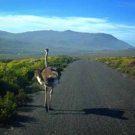 Discovery Tours - Day Tours: cape of good hope nature reserve