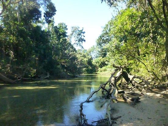Ingan Tours- Day Tours: Rainforest Relaxation