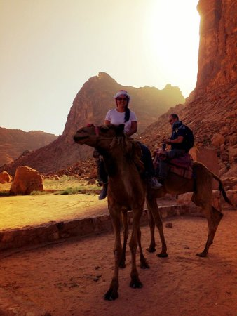 Bedouin Lifestyle Camp: Rode camels back to the village