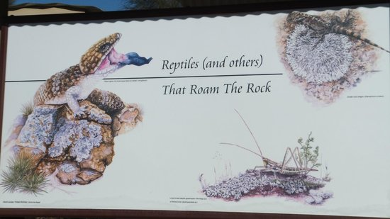 Wave Rock: Beware of These.......!!!!!