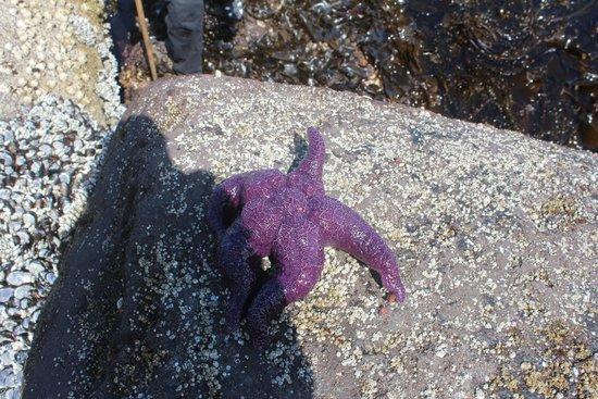 Salt Creek Recreation Area : Sea star