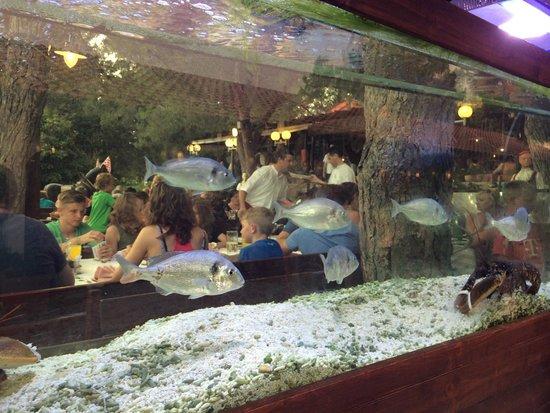 Zaton Holiday Resort: aquarium