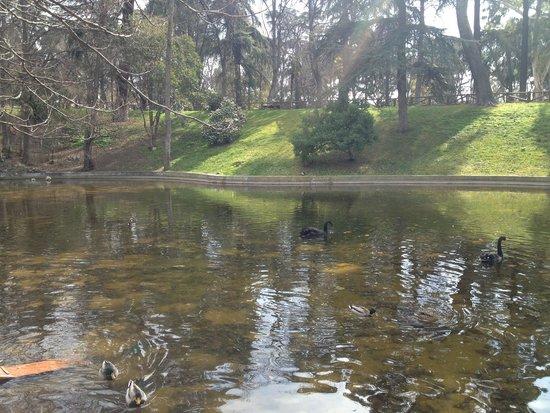 Parque del Retiro: pond- south of park