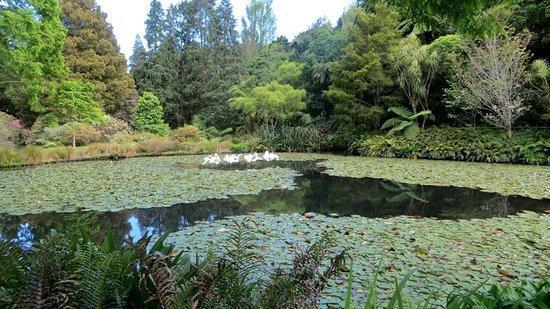 Pukekura Park: Certainly not a flock of flamingos