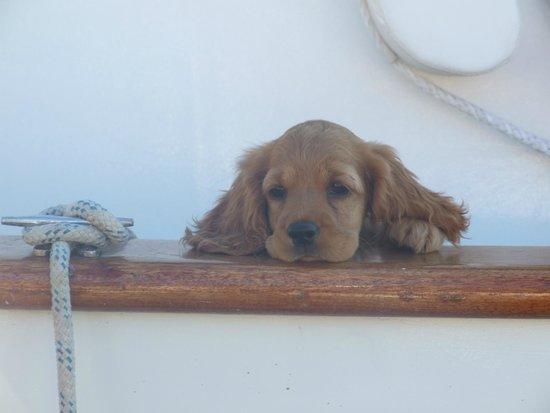Labranda TMT Bodrum Resort: pretty little puppy