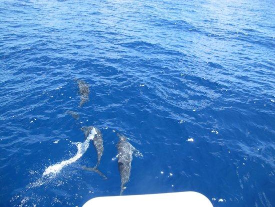 Niyama Private Islands Maldives: les dauphins