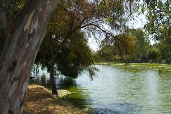 Baia degli Achei Village - TH Resorts: vista del laghetto