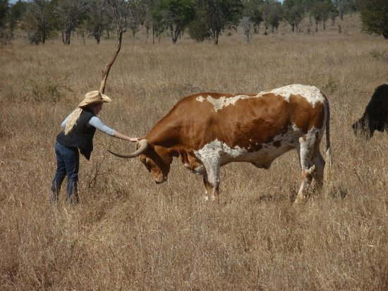 you are in my control picture of texas longhorn wagon tours and