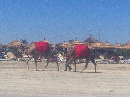 Yadis Djerba Golf Thalasso & Spa: Spiaggia