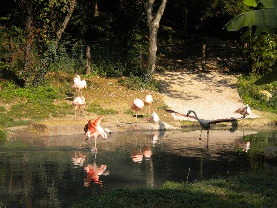 Parco Natura Viva: Fenicotteri rosa