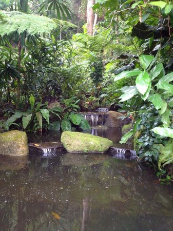 Tropical Spice Garden: Small water feature.