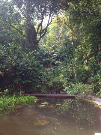 Tropical Spice Garden: Jungle scenery