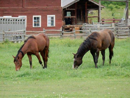 Three Bars Guest Ranch: Grazing