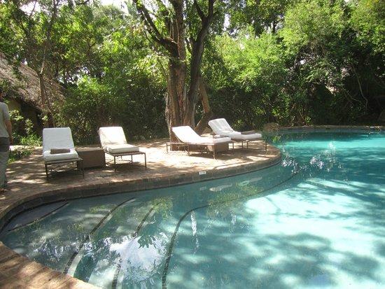 Londolozi Private Game Reserve: pioneers camp pool