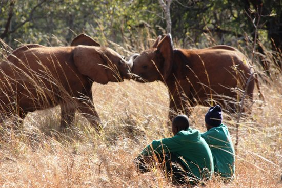 Lilayi Lodge: The Elephant Experience