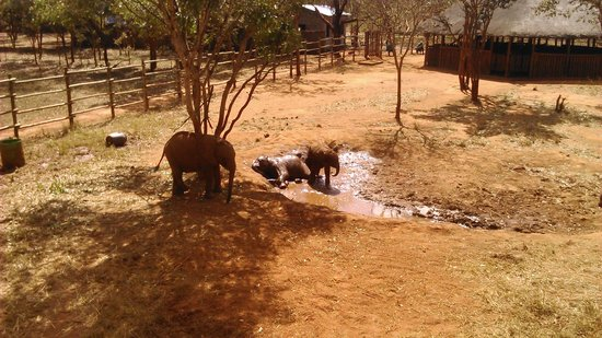 Lilayi Lodge: A nice mud bath