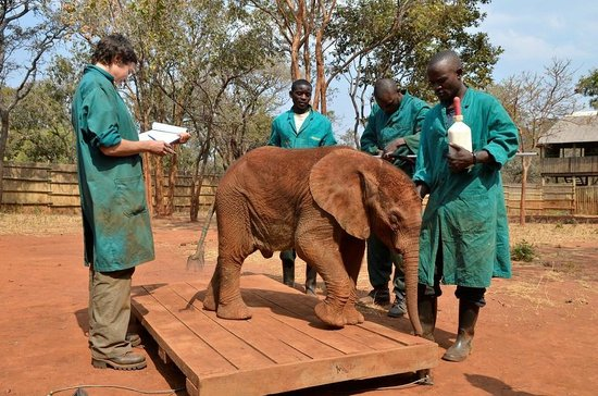 Lilayi Lodge: weigh in