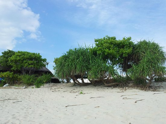Trikora Beach Club & Resort: Mangrove