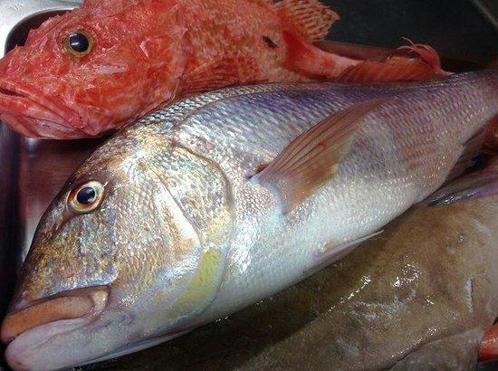 Latini Restaurant: Fresh Fish