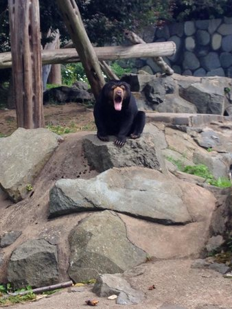 Sun bears at Edinburgh Zoo