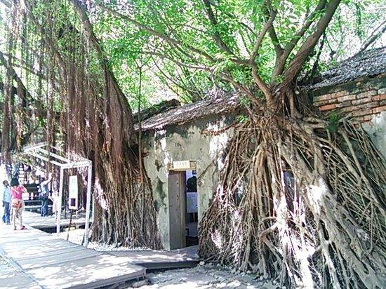 Maison arboricole d'Anping : 入口