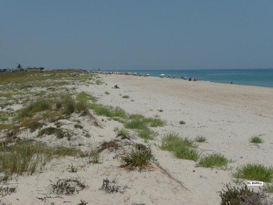 Praia do Barril : A quelques centaines de m ...
