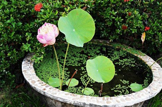 Viva Vacation Resort: garden